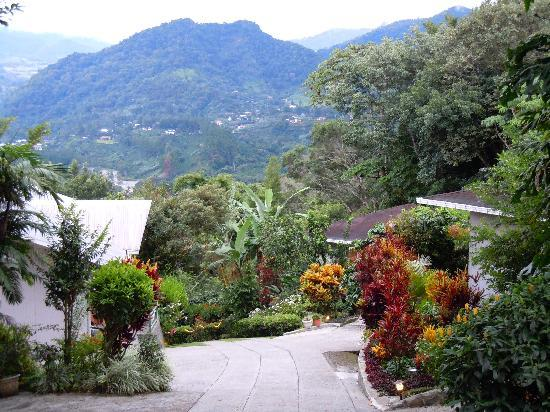 La Montana y el Valle Coffee Estate Inn: View down the drive past the bungalows