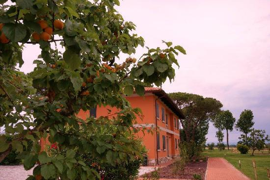 La Fattoria di Tirrenia Country Resort: cascina