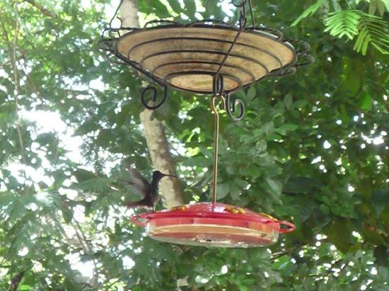 Mystic River Resort: one of the many hummingbirds
