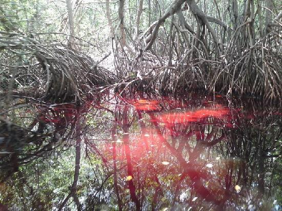 Celestun, Mexiko: El manglar, tinto de rojo, efecto que se produce en temporada de lluvias, impresionante.
