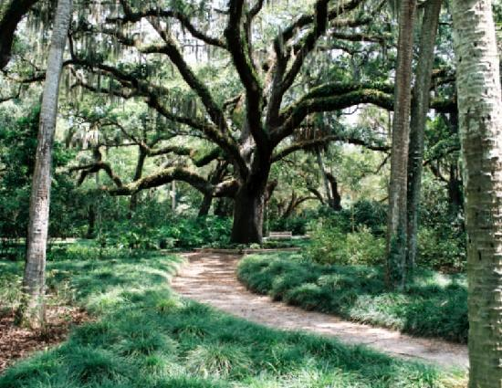 Palm Coast, FL: Giant Oak Tree At Washing Oaks State Park