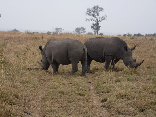 Singita Boulders Lodge: Rhinos