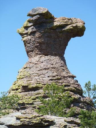 Willcox, AZ: Camel Rock