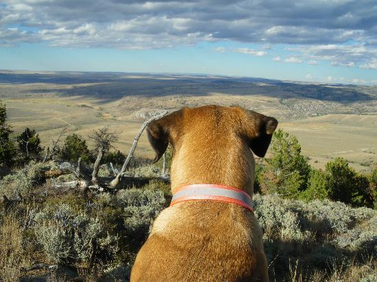 Hanna, WY: Buster daydreaming -- (actually sighting for antelope...)