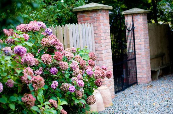 Laurel Villa: Amazing Hydrangea by the back gate