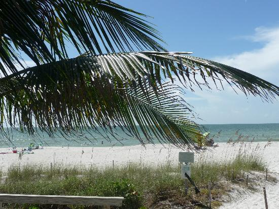 Marco Island, FL: beach view