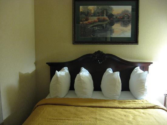 Quality Inn & Suites: queen bed 2
