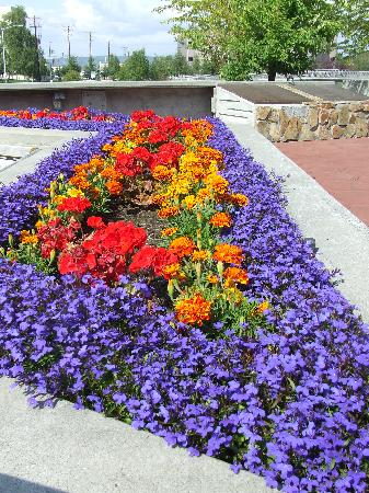 Fairbanks in bloom