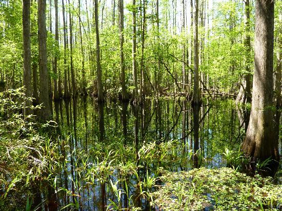Sebring, Floryda: Wildnis im Highlands Hammock State Park