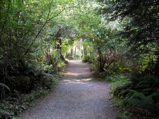Sidney, Canada: Trail at Dungeness Spit, Washington