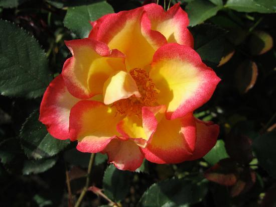 Central Saanich, Canada: Beautiful flowers & roses