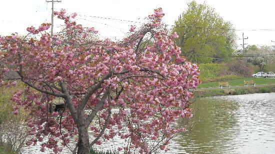 New Jersey: Beautiful Spring flowers