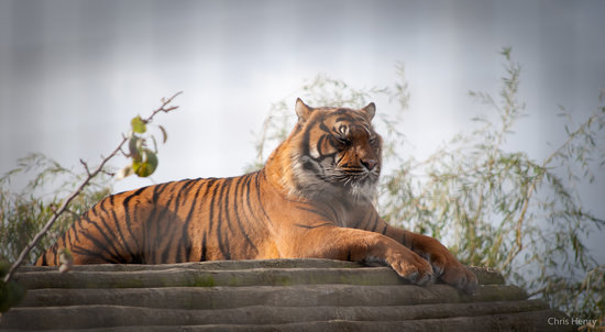 The World Bank  launched a wildlife conservation project for Bangladesh.