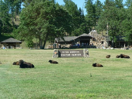 Mountain View Lodge & Cabins: finally some real buffalo