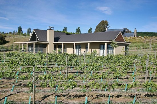 Beaconfield B&B: House with vineyard from West site