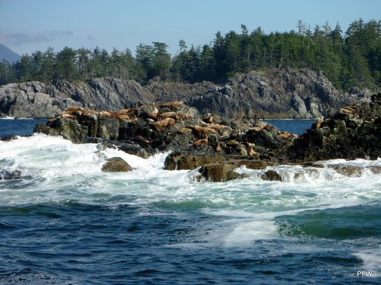 Ucluelet, : The views!