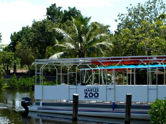 Zoo Animals Picture Of Naples Zoo At Caribbean Gardens Naples Tripadvisor