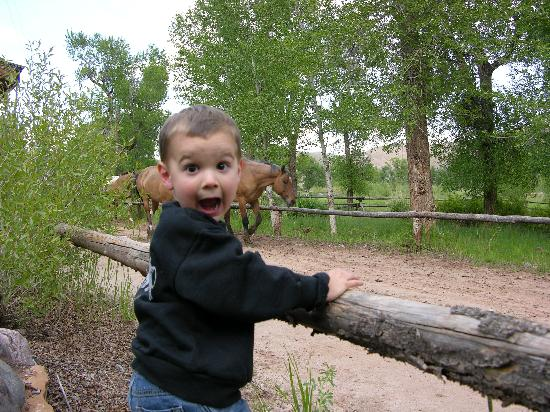 The Lazy L and B Ranch: shows my son's excitement when the horses are ran out to pasture