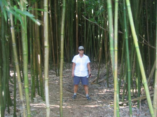 Royal Mauian: We also liked hiking in the bamboo forest
