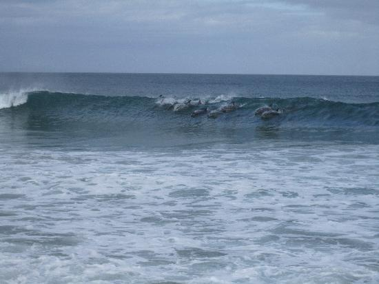 Anlin Beach House: Dolphins in the waves