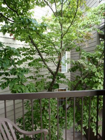Homewood Suites by Hilton: Landscaping from balcony
