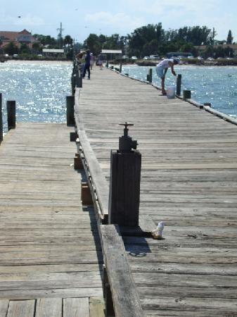 """Anna Maria Pirates Den: Fishing pier and Dolphins """"Relaxing Place"""""""