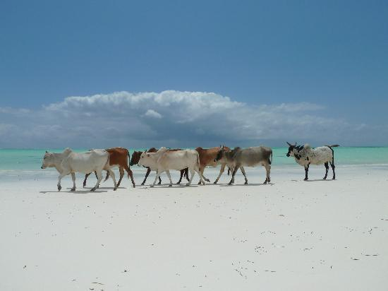 Paje, Tanzania: strand