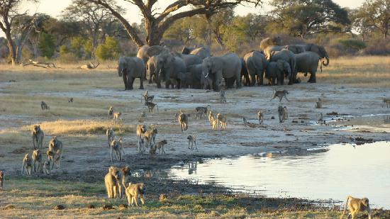 Perfect Holiday - Review of The Hide, Hwange National Park, Zimbabwe ...