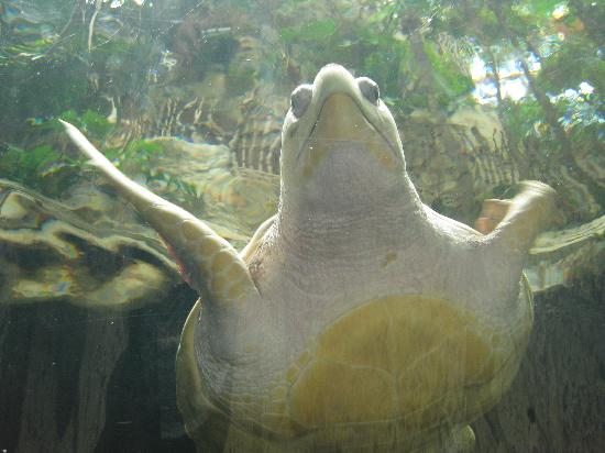 Dallas World Aquarium Turtle Picture Of Dallas World