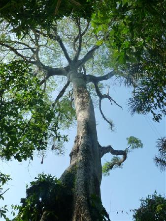Fotos de Amazon Tree Climbing, Manaus