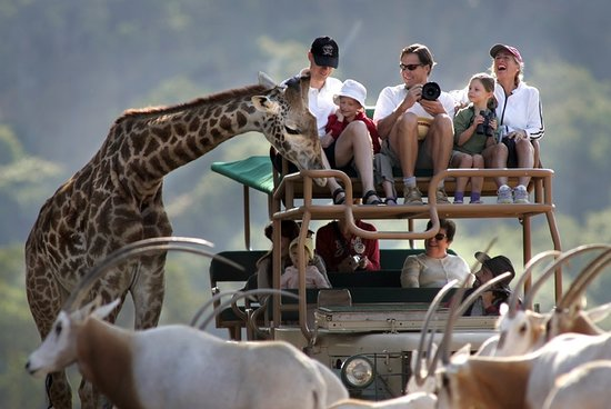 Safari West: Adventure awaits!