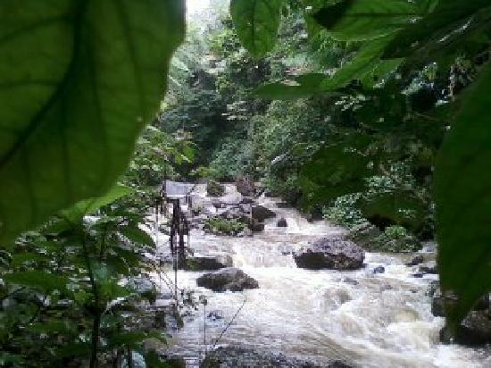 El Yunque National Forest, เปอร์โตริโก: Hiking through the rain forest to the amazing waterfall
