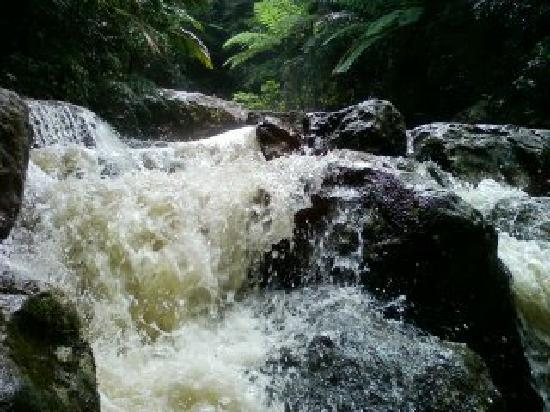 El Yunque National Forest, เปอร์โตริโก: Hiking through the rain forest to the amazing waterfal