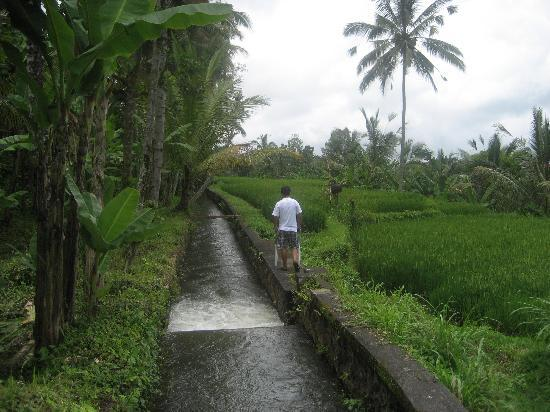 The Purist Villas and Spa: Walking through rice field on my own private tour.