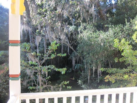The Laurel Oak Inn: A view from our private balcony in the Lilac Room :)