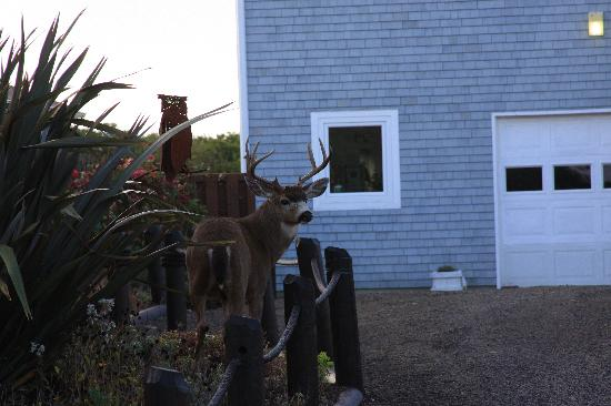 Ocean Shores, Вашингтон: Lots of deer in area, but none right at the condo