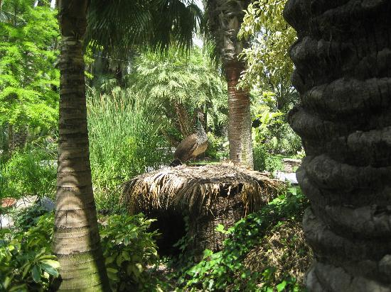 Peacock nest - Picture of Palm Groves (Palmeral) of Elche, Elche - TripAdvisor