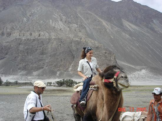 Two Hump Camel http://www.tripadvisor.com/LocationPhotos-g1156049-Nubra_Valley_Ladakh_Jammu_and_Kashmir.html