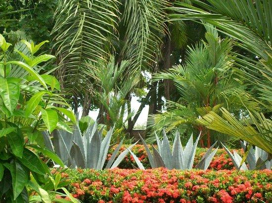 The Red Palm Villas: Amazing Tropical Gardens
