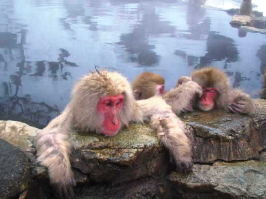 Ryokan Biyunoyado:  Free ride to Snow Monkey Park