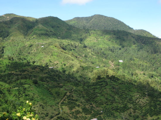 Blue Mountains National Park, Jamaica: the coffee farm below the little house