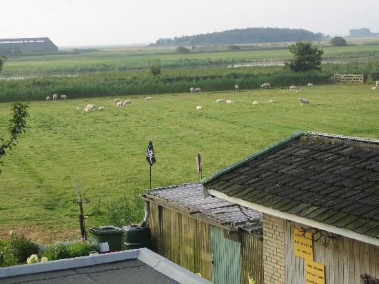 De Cocksdorp, The Netherlands: another view from our room (sheeps!)