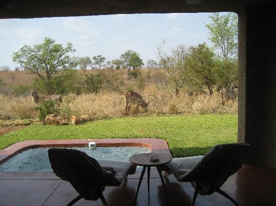 Sabi Sabi Earth Lodge: Terrasse mit Pool
