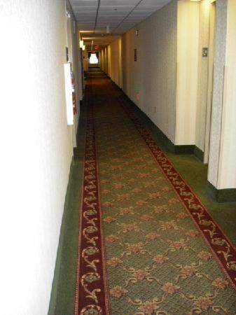 Hampton Inn and Suites Valley Forge/Oaks: Hallway