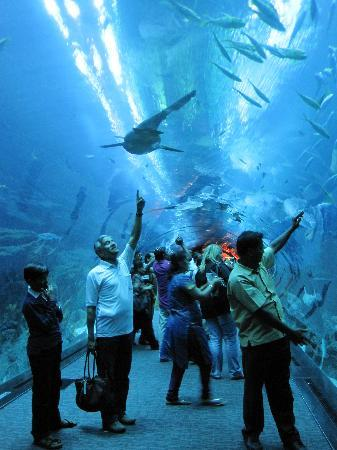 Photos of Dubai Aquarium & Underwater Zoo, Dubai
