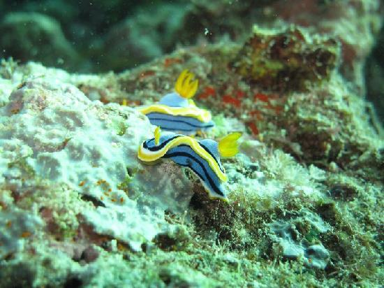 Spheredivers Homestay & Scuba Diving: Flat worm