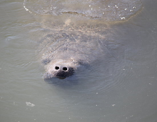 Tampa Electric Manatee Viewing Center