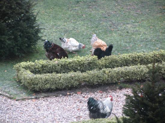 Ludes, Francja: Chickens!
