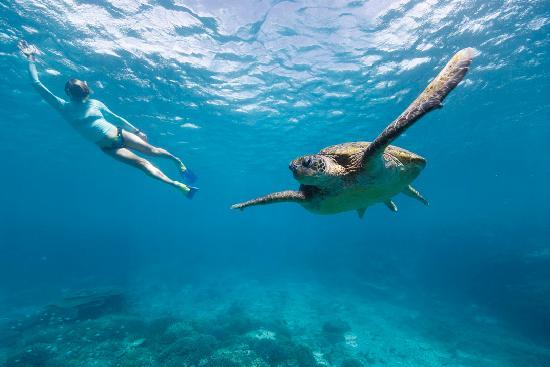 Great Barrier Reef, Australia: Snorkelling with a Sea Turtle