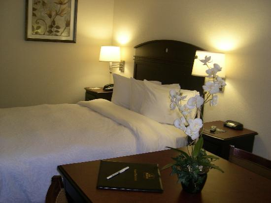 BEST WESTERN Palm Coast: Comfortable King room
